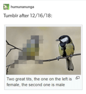 Tits, Tumblr, and One: humunanunga  Tumblr after 12/16/18:  Two great tits, the one on the left is  female, the second one is male Tumblr after 12/16/18