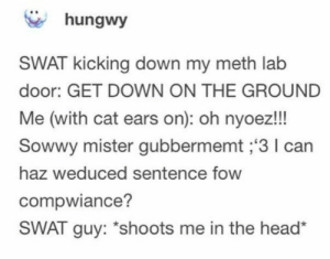 Head, Cat, and Meth: hungwy  SWAT kicking down my meth lab  door: GET DOWN ON THE GROUND  Me (with cat ears on): oh nyoez!!  Sowwy mister gubbermemt ;'3 I can  haz weduced sentence fow  compwiance?  SWAT guy: *shoots me in the head*