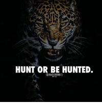 Memes, 🤖, and You: HUNT OR BE HUNTED. You choose! successes