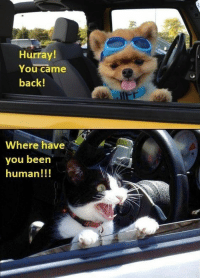 very week we collect the highest voted cat memes that our users created for ICanHas Cheezburger's LOLCats. #cats # cat memes # caturday # lol cats # funny memes: Hurray!  You came  back!  Where have  you beern  human!!! very week we collect the highest voted cat memes that our users created for ICanHas Cheezburger's LOLCats. #cats # cat memes # caturday # lol cats # funny memes