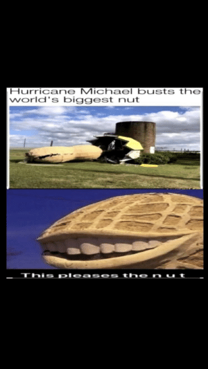 Please the nut: Hurricane Michael busts the  world's biggest nut  This pleas es th e n u t Please the nut