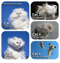 mph = meows per hour https://9gag.com/gag/aoOWrjn/sc/timely?ref=fbsc: Hurricane Wind Scale  Cat 3  111-129 mph  Cat 1  74-95 mplh  Cat 4  130-156 mph  Cat 2  96-110 mph  Cat 5  157 mph or higher mph = meows per hour https://9gag.com/gag/aoOWrjn/sc/timely?ref=fbsc