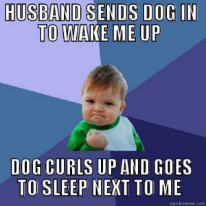 Sleep, Band, and Dog: HUS BAND SENDS DOG IN  TOAEME O  DOG CURLS UP AND GOES  TO SLEEP NEXT TO ME  quickmeme.com In your face, morning person!