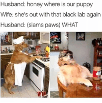 Funny, Black, and Puppy: Husband: honey where is our puppy  Wife: she's out with that black lab again  Husband: (slams paws) WHAT  Bm 🐶🐶🐶🐶