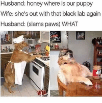 WhT in tarnation: Husband: honey where is our puppy  Wife: she's out with that black lab again  Husband: (slams paws) WHAT  UI WhT in tarnation