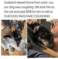 Fake, Memes, and Work: husband stayed home from work cuz  our dog was coughing. We took him to  the vet and paid 85$ for him to tell us  OUR DOG WAS FAKE COUGHING I need this dog to stay home with me when I'm also fake coughing 😂💯(@teamnobadtimes)