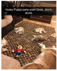 30 Of The Most Hilarious Animal Pictures That Will Make Your Day: Husky Puppy party over! Drink, drank,  drunk..  50 30 Of The Most Hilarious Animal Pictures That Will Make Your Day