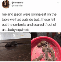 Memes, Baby, and 🤖: @hvnnvhr  @hvnnvhr  me and jason were gonna eat on the  table we had outside but...these fell  out the umbrella and scared tf out of  us...baby squirrels 😹😲