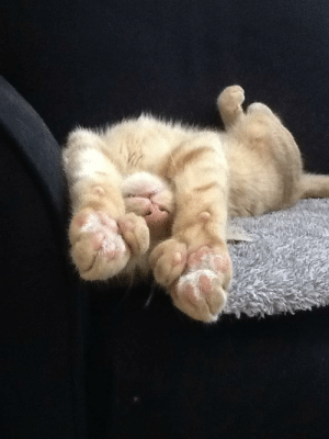 You, More, and Polydactyl: I'll see your polydactyl and raise you 12 more beans.