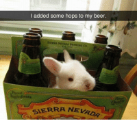 Beer, Dad, and Dank: I added some hops to my beer.  SIEPRA NEVADA BREWING Co  Purest  dients  SIERRA NEVAO Sudden dad joke