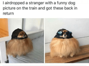 Funny, Train, and Back: I airdropped a stranger with a funny dog  picture on the train and got these back in  return Having this happen made my day.☀️