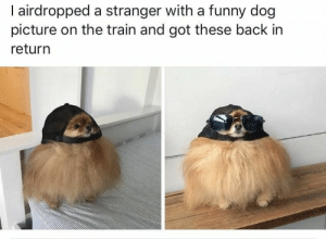 These strangers just trying to brighten the world: 30 People Who Are So Good And Pure That We Don't Deserve Them: I airdropped a stranger with a funny dog  picture on the train and got these back in  return These strangers just trying to brighten the world: 30 People Who Are So Good And Pure That We Don't Deserve Them