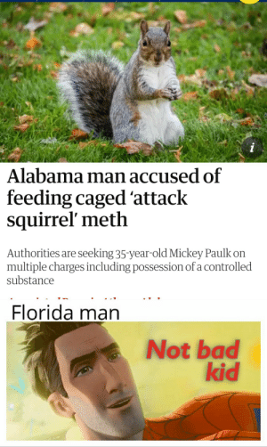 Bad, Florida Man, and Reddit: i  Alabama man accused of  feeding caged 'attack  squirrel' meth  Authorities are seeking 35-year-old Mickey Paulk on  multiple charges including possession of a controlled  substance  Florida man  Not bad  kid Florida man is impressed