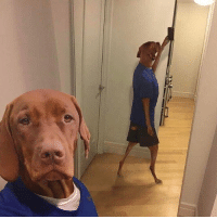 Funny, Memes, and Never: I always wanted to be one of those accounts that could just post a funny picture of a dog and get a million likes pls like this picture so I can do that and never have to think again