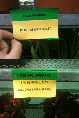 phyerfly:   i felt like i connected a lot to the stickers at the greenhouse today : I AM A PERENNIAL  PLANT ME AND FORGET   PAM AN ANNUAL  I AM BEAUTIFUL BUT I  WILL ONLY LAST A SEASON phyerfly:   i felt like i connected a lot to the stickers at the greenhouse today