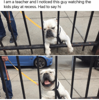 Animals, Cute, and Cute Animals: I am a teacher and l noticed this guy watching the  kids play at recess. Had to say hi SWIPE & TAG ❤️ follow me @v.cute.animals 👈👈 (via @tank.sinatra)