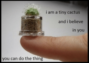 https://t.co/qUVTniaLAi: i am a tiny cactus  and i believe  in you  you can do the thing https://t.co/qUVTniaLAi