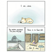 9gag, Being Alone, and Food: I am. .alone.  The masters, abandoned There is no food left  this place long ago  0  But I stay Well if one human year is roughly seven dog years… - cr: @thepigeongazette - comics 9gag goodboy