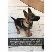 Crying, Funny, and Joker: I am CRYING I just met a police dog in  training in Glasgow central. His name is  joker and this is his first day on the job More dog snaps