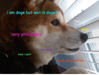 Dank, Doge, and Wat: i am doge but wat is doge?  wow  very philasophy  have i soul?  uch ex
