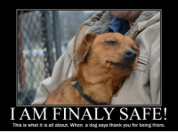 Yes, that IS what it is all about! Best Feeling Ever for a Shelter Dog.  #AdoptShelterDogs #NewBestFriend #DogsAreFamily: I AM FINALY SAFE!  This is what it is all about. When a dog says thank you for being there. Yes, that IS what it is all about! Best Feeling Ever for a Shelter Dog.  #AdoptShelterDogs #NewBestFriend #DogsAreFamily