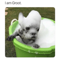 Funny, I Am Groot, and Groot: I am Groot.