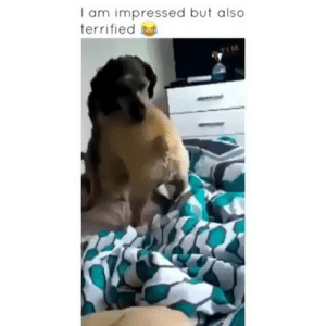 Dogs, Memes, and 🤖: I am impressed but also  terrified And this is why I get small dogs 😭🤦🏻♂️