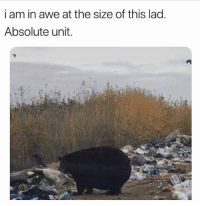 Memes, Camera, and 🤖: i am in awe at the size of this lad.  Absolute unit. It's just a poor camera angle..😂😂