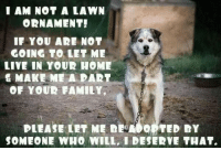 Who else agrees with this?: I AM NOT A LAWN  ORNAMENT!  IF YOU AR NOT  GOING TO LET ME  LIVE IN YOUR HOME  & MAKE ME A PART  OF YOUR FAMILY,  PLEASE LET ME DEMO。 TED DY  SOMEONE WHO WILL, I DESERVE THAT. Who else agrees with this?
