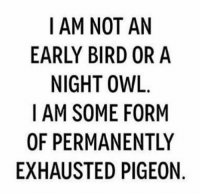 Current mood:: I AM NOT AN  EARLY BIRD OR A  NIGHT OWL  I AM SOME FORM  OF PERMANENTLY  EXHAUSTED PIGEON Current mood: