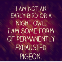A hungry exhausted pigeon.: I AM NOT AN  EARLY BIRD OR A  NIGHT OWL  I AM SOME FORM  OF PERMANENTLY  EXHAUSTED  PIGEON A hungry exhausted pigeon.
