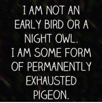 Exhausted Pigeon: I AM NOT AN  EARLY BIRD OR A  NIGHT OWL  I AM SOME FORM  OF PERMANENTLY  EXHAUSTED  PIGEON