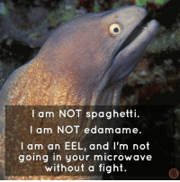 Dank, Wow, and Edamame: I am NOT spaghetti.  am NOT edamame.  I I am an EEL, and I'm not  going in your microwave  without a fight. Wow.