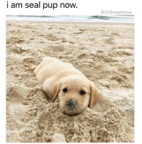 Bless Up Chicago And Girls I Am Seal Pup Now DrSmashlove 59