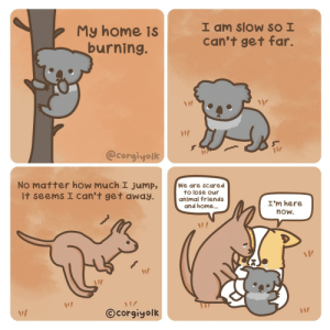 My home is burning [OC]: I am slow SO I  can't get far.  My home is  burning.  @corgiyolk  No matter how much I jump,  it seems I can't get away.  We are scared  to lose our  animal friends  and home..  I'm here  now.  ©corgiyolk My home is burning [OC]