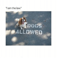 """nice: '""""I am the law.""""  poos  ALLOWED nice"""