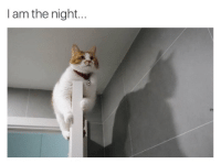 Night, I Am, and I Am the Night: I am the night... Batcat