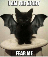 I AM THE NIGHT  FEAR ME So cute! What was your favorite Halloween Costume? ..HB