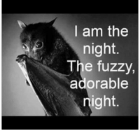 I am the  night.  The fuzzy,  adorable  night