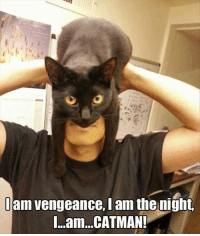 I Am Vengeance: I am vengeance,lam the night,  I...am...CATMANI