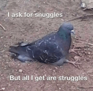 Ask, All, and For: I ask for snuggles  But all I get are struggles