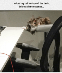 srsfunny:Don't Abide By The Law: I asked my cat to stay off the desk,  this was her response... srsfunny:Don't Abide By The Law