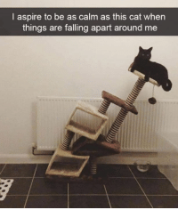 Dank, Keep Calm, and 🤖: I aspire to be as calm as this cat when  things are falling apart around me Keep calm and meow loud so your owner knows you're at their feet