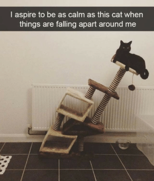 Falling Apart: I aspire to be as calm as this cat when  things are falling apart around me