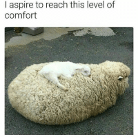 a cloud child resting on top of its cloud mother UwU - Max textpost textposts: I aspire to reach this level of  comfort a cloud child resting on top of its cloud mother UwU - Max textpost textposts