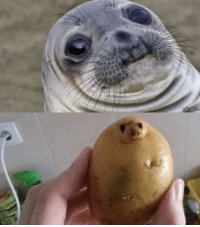 Cute, Funny, and Love: I been watching too many cute seal videos