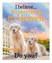 Animals, Heaven, and Memes: I believe.  All animals go  to Heaven  0  shakepaws.com  ,-Do you?