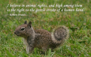 Memes, Animal, and Animal Rights: I believe in animal rights, and high among them  is the right to the gentle stroke of a human hand.  Robert Brault Like if you believe in animal rights