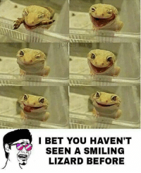 Twitter: BLB247 Snapchat : BELIKEBRO.COM belikebro sarcasm meme Follow @be.like.bro: I BET YOU HAVEN'T  SEEN A SMILING  LIZARD BEFORE Twitter: BLB247 Snapchat : BELIKEBRO.COM belikebro sarcasm meme Follow @be.like.bro