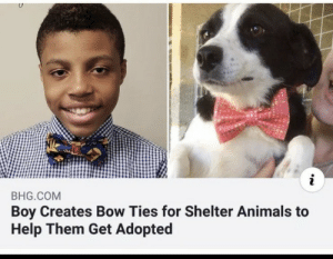 *happiness noise*: i  BHG.COM  Boy Creates Bow Ties for Shelter Animals to  Help Them Get Adopted *happiness noise*